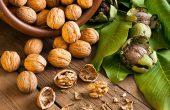 Грецкие орехи — польза и вред для организма. Лечебные свойства. Рецепты