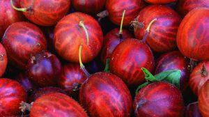 Плоды растения – богатый источник витамина C и иных соединений, укрепляющих иммунную систему