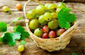Крыжовник – чем полезна ягода? Кому нельзя ее употреблять? Народные рецепты от заболеваний