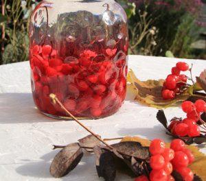 Чтобы сохранить все полезные свойства лимонника, эго можно также заготовлять на зиму в виде сиропов или компотов из ягод