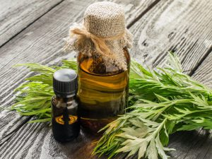 Настойка полыни широко используется как в народной так и в традиционной медицине