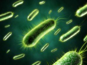 Трихопол эффективен при лечении ряда заболеваний, вызванных анаэробными бактериями