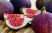 Волшебный фрукт инжир – чем он полезен для организма? Сколько плодов можно съесть? Противопоказания. Народные рецепты