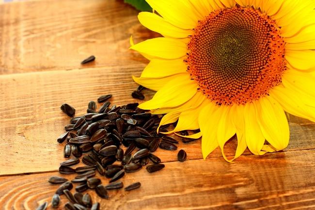 Семечки подсолнуха - легко усваиваемый продукт, обладающий целебными свойствами. Семечки благотворно влияют на эндокринную и нервную системы