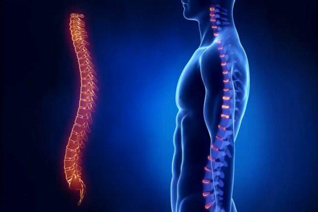 Протеогликаны, которые присутствуют в составе, обладают заместительным эффектом, оказывают трофическое действие, достоверно повышают показатели однородности костной ткани, гидрофильности, высоты хряща при МРТ-исследовании