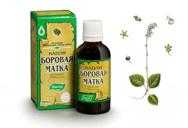 Благодаря своему составу, Боровая матка может применяться и в качестве мочегонного средства, как противовоспалительное, источник витамина С, как средство, снижающее брожение в желудке, повышающее иммунитет