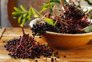 Мало кто знает, что чай из ягод и цветов черной бузины - это еще и отличное народное успокоительное средство, которое не имеет побочных эффектов