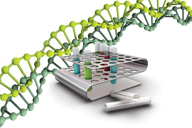 Диагностика методом ПЦР (полимеразная цепная реакция) является одной из самых новейших и высокоточных