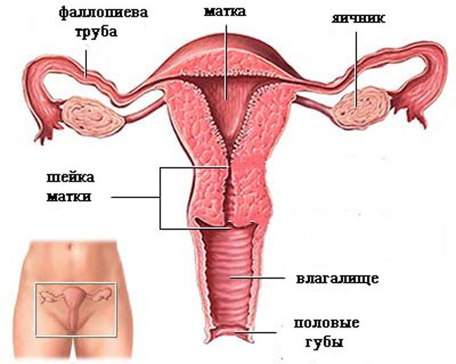 Заболевание, характеризуется нарушением клеточного строения поверхностного слоя шейки матки