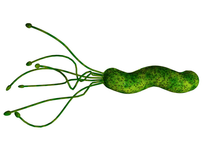 Хеликобактер пилори может находиться в вашем организме на протяжении долгого времени, не причиняя вреда здоровью, но при благоприятных для нее условиях она начинает активно размножаться и повреждать слизистые оболочки