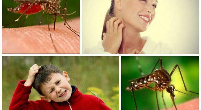 Мошки и комары недолюбливают желтый цвет – если правильно подобрать одежду, это может уберечь от внимания насекомых