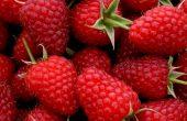Малина — польза и вред для здоровья, противопоказания, народные рецепты