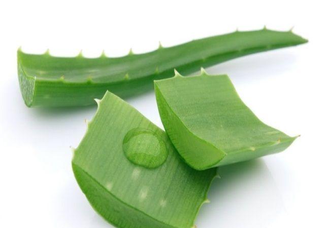 Листья алоэ отличное средство для лечения пародонтоза.
