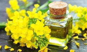 Остановимся на том, насколько полезно рапсовое масло для организма и может ли нанести вред здоровью
