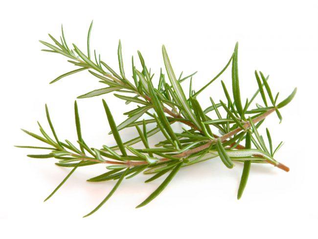Розмарин имеет в себе такие эфирные масла, которые оказывают наибольший лечебный эффект, среди них такие, как эвкалиптовое, борнеол, камфара, вербенон и альфа-Пинен, которые и создают присущий розмарину освежающий запах