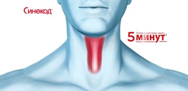 Синекод кроме противокашлевого действия оказывает также бронхорасширяющее и некоторое противовоспалительное действие. Препарат значительно улучшает показатели спирометрии и оксигенизацию крови