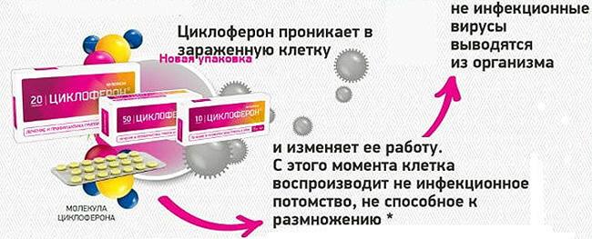 Противовирусное действие Циклоферона