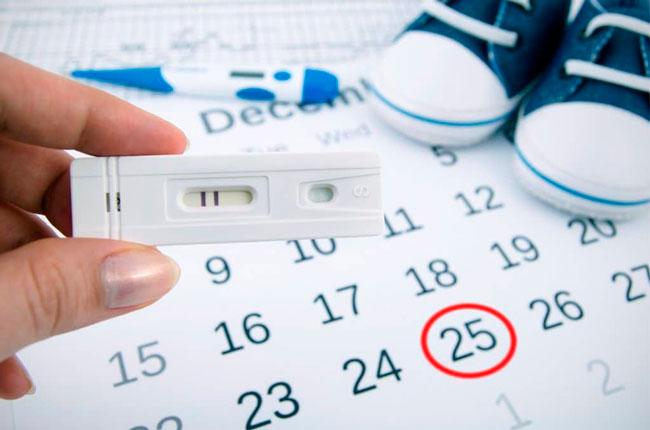 При постоянной продолжительности цикла тест начинают использовать за 17 дней до наступления месячных – это максимальная фиксированная длина постовуляторной фазы, а предовуляторная фаза может быть разной длины