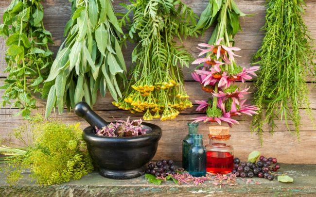 Сборы трав могут применяться в сочетании с другими лекарствами. Напомним, что одним из залогов благополучного лечения народными методами и средствами варикоза считается соблюдение диеты при варикозе