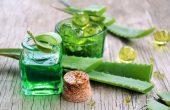 Алоэ вера и столетник – лечебные свойства, народные рецепты и противопоказания, заготовка листьев