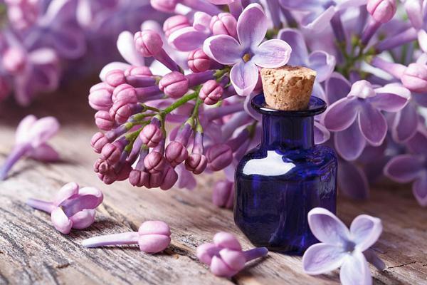 Не пропустите цветение сирени - ее цветки являются прекрасным природным средством для лечения грибка ногтей