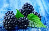 Ежевика – полезные свойства, рецепты и противопоказания, диета с ягодой ежевикой