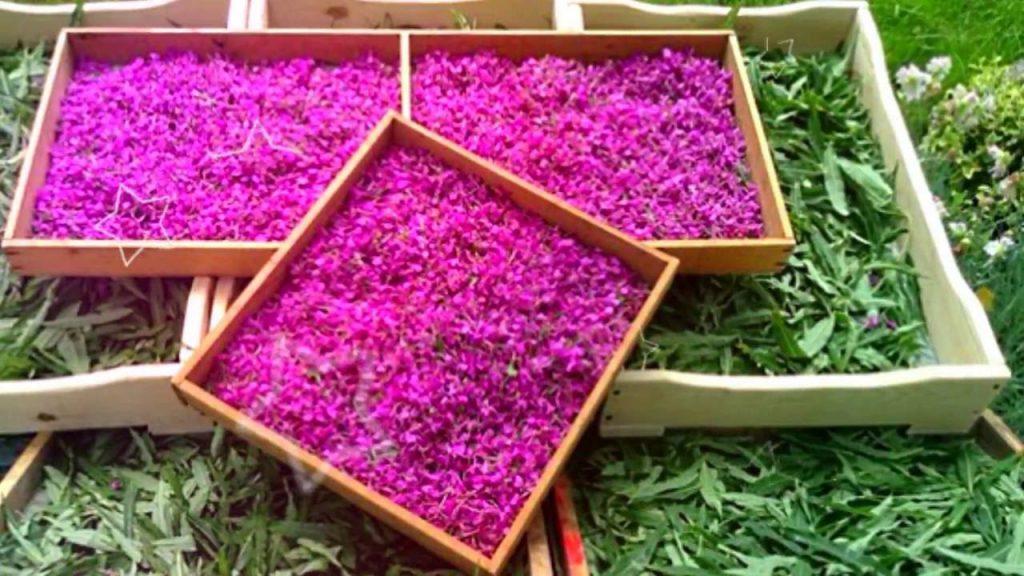 Лечебные свойства этого растения также часто используют в косметологии, при изготовлении различных косметических средств