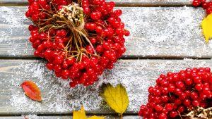 Калина - настоящий кладезь витаминов и целебных веществ. Особенно актуально включать в рацион калину в осенне-зимний период