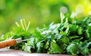 Кинза – пряная трава, известная человеку уже более 5 тысяч лет. Другими названиями растения являются «кориандр» и «китайская петрушка». Листья кинзы действительно похожи на листья петрушки