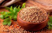 Кинза – польза и вред для здоровья, противопоказания, народные рецепты