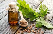 Кора дуба – лечебные свойства и противопоказания, рецепты от заболеваний