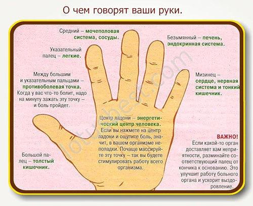 О чём говорят ваши руки и пальцы - симптомы заболеваний по каждому пальцу. Большой палец - толстый кишечник; между большим и указательным пальцем - противоболевая точка; указательный палец - лёгкие; средний палец - сосуды и мочеполовая система; безымянный палец - эндокринная система и печень; мизинец - тонкий кишечник, сердце и нервная система.