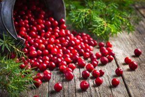 Брусника - одна из ягод, обладающая чудодейственными свойствами, преувеличить которые невозможно, используется не только в медицине, но и в косметологии