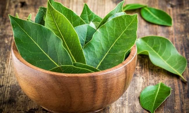 Лавровый лист - популярная приправа для различных блюд, содержит в своем составе много витаминов и микроэлементов, благодаря чему обладает множеством целебных свойств