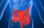 Пробиотики и пребиотики для кишечника – в чем разница? Список лучших препаратов с живыми бактериями