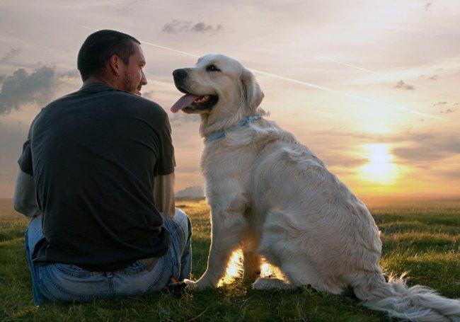 Общение с животными помогает победить депрессию