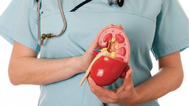 Пиелонефрит - заболевание, лечением которого занимается врач-нефролог