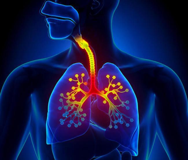 Бронхит - заболевание, лечением которого занимается врач-пульмонолог
