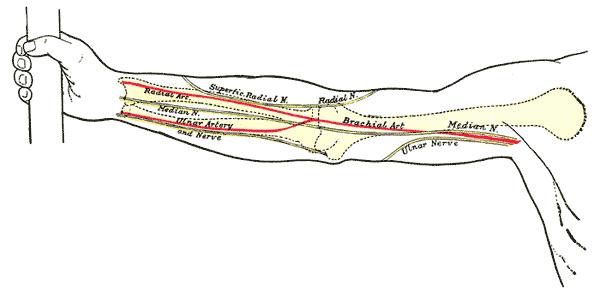 Антекубитальная ямка