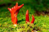 7 самых ядовитых грибов в мире, опасных для жизни