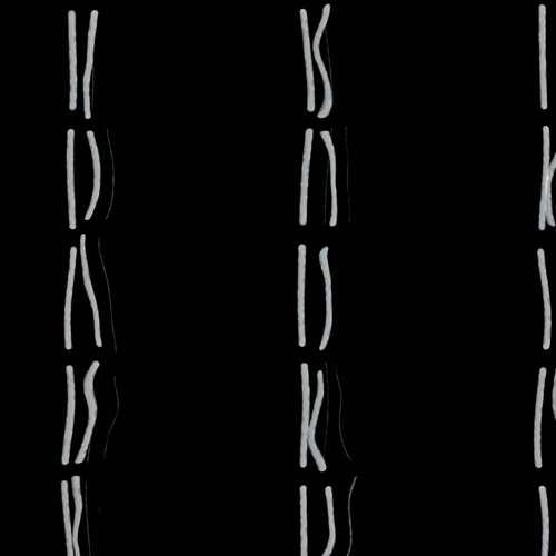 Хромосомные нити человеческих хромосом. nadil / Pond5.com