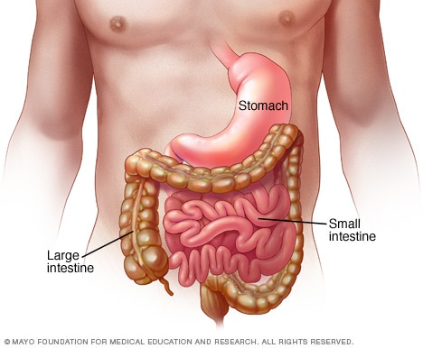 Вирусный гастроэнтерит Желудок, тонкая кишка и толстая кишка (толстая кишка) являются частью вашего пищеварительного тракта, который обрабатывает продукты, которые вы едите. Вирусный гастроэнтерит-это воспаление этих органов, вызванное вирусом.