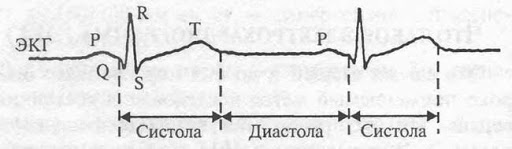 Систола и диастола на ЭКГ записи.
