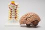 Почему так важна реабилитация после поражения нервной системы