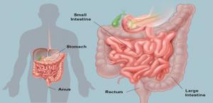 При энтероколите страдает пищеварительный тракт, так как поражается слизистая кишечника