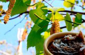 Birch tar – use, rules of use, contraindications and side effects