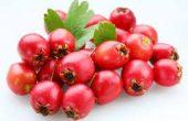 Боярышник – польза и вред настойки и чая из ягод и цветов, народные рецепты от заболеваний, противопоказания