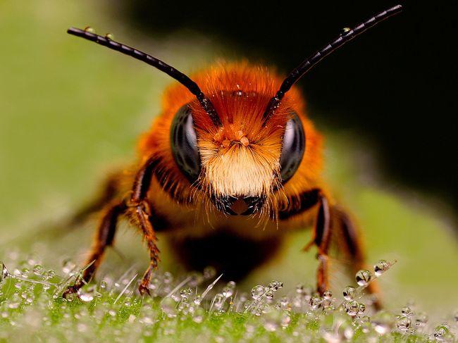 Пчелиный яд - отличное средство для лечения болезни Бехтерева. Но назначить его может только врач!