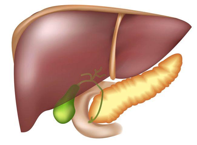 Расстройства работы органов пищеварения могут говорить о проблемах с печенью