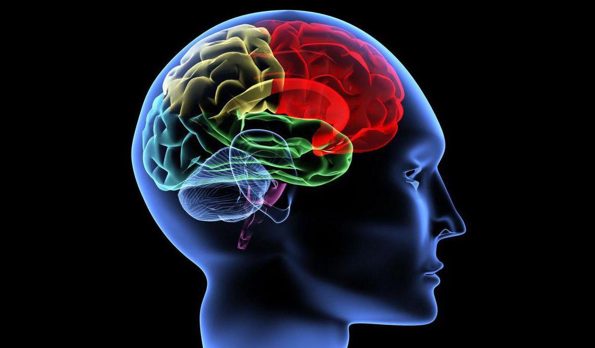Многие люди стремятся улучшить свою память и работу мозга с помощью медицинских препаратов